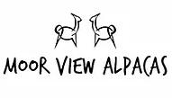 Moor View Alpacas / Valais Blacknose Sheep UK